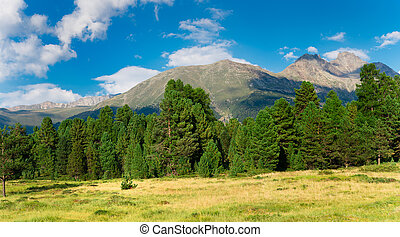 Panorama of green trees and mountains
