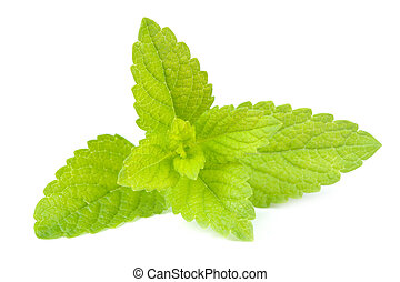 Lemon Balm Melissa Officinalis Isolated on White Background...