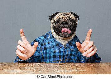 Man with pug dog head in checkered shirt pointing up - Man...