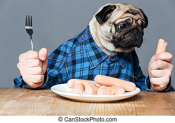 Hungry pug dog with man hands holding fork and sausage