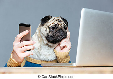 Pug dog with man hands using laptop and cell phone -...