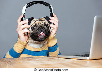 Happy man with pug dog head in headphones using laptop -...