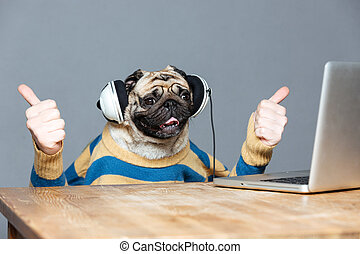 Pug dog with man hands in headphones showing thumbs up -...