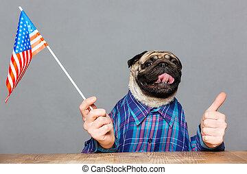 Funny pug dog with man hands holding usa flag - Funny pug...