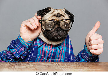 Man with pug dog head in glasses showing thumbs up - Amusing...