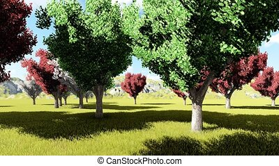Calleary pear orchard springtime animation