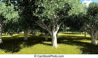 California buckeye (Aesculus californica) trees animation