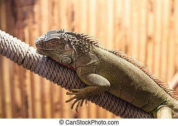 Photo of big lizard sitting in a beautiful zoo