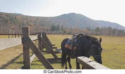 The horse with complete harness is standing next to the...