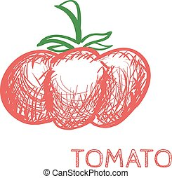 Hand Drawn Tomato Sketch Vector