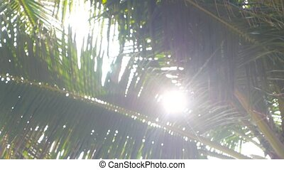 Lens Flare through Palm Tree Leaves