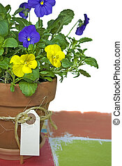 Potted Pansy - Pansy plant in a clay pot with tag on twine.