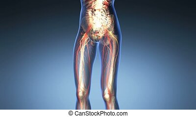 science anatomy of human body in x-ray with all colored...