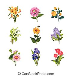 Garden Flowers Collection - Garden Flowers Hand Drawn Vector...