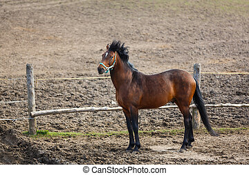 Horse in the wind - Horse nearby the wooden fence, windy...