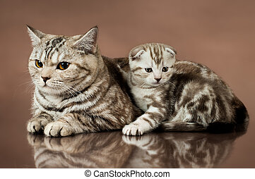 kittens - family group of beautiful kitten with mother,...