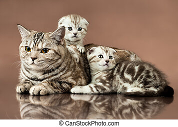kittens - family group of two beautiful kitten with mother,...