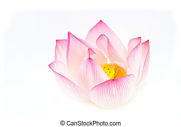 Lotus flower is a important symbol in Asian culture.