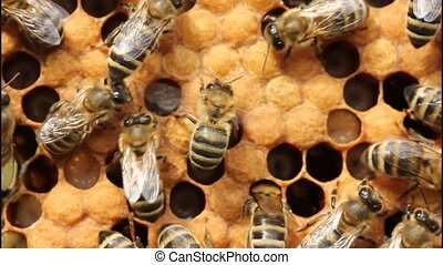 Bees take care of larvae