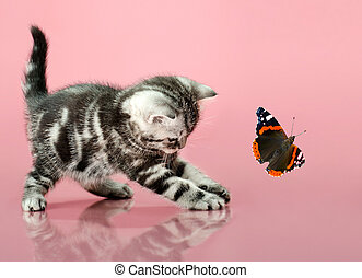 kitten - fluffy gray beautiful kitten, breed...