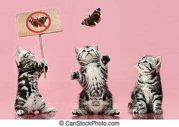 kitten - group of gray beautiful kitten, breed...