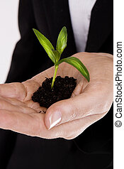 woman\'s hand with a plant