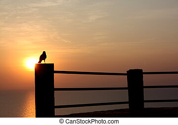 Sunset Point - A silhouette of a crow at a sunset point...