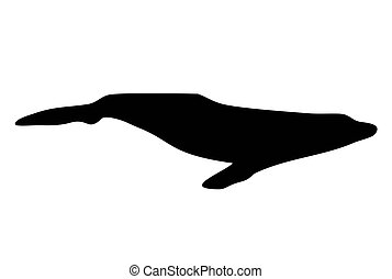 humpback silhouette on a white background