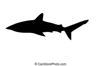shark silhouette on a white background