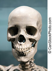 Scary Skeleton Skull - Old bony skeleton skull under...