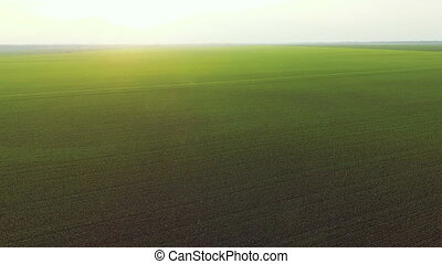 Aerial view of sunset on a background of green bright fields and horizon