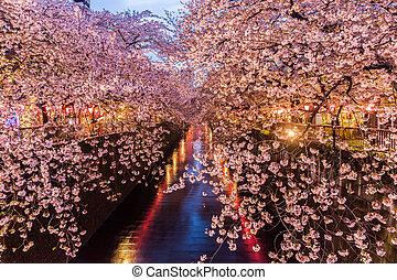 canal, flor, Cereza,  sakura,  meguro, o