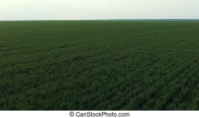 Aerial view of winter wheat, fast moving