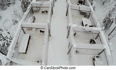 Aerial view of dogs in cages on winter day - Flying over...