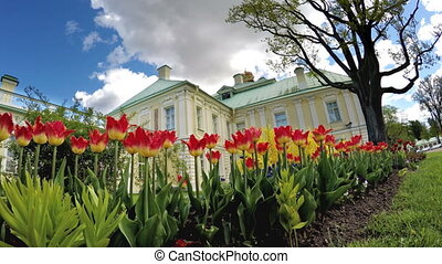 Tulips before the Grand Menshikov Palace. St. Petersburg,...