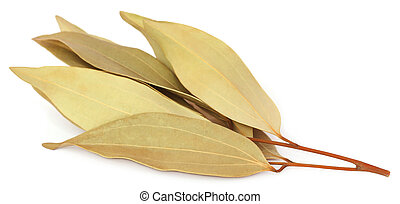 Cassia leaves over white background