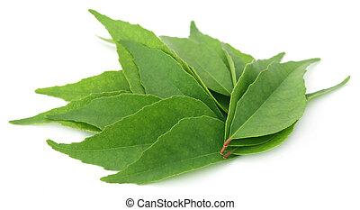 caril, folhas,