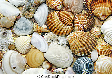 seashells background - background made of a closeup of a...