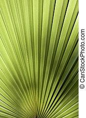 Palm leaf in back light - Close-up of palm leaf in back...