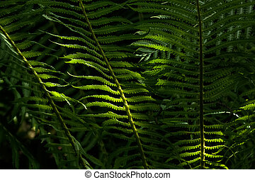Fern Spring Forest - Fern leaves illuminated by the sun Dark...