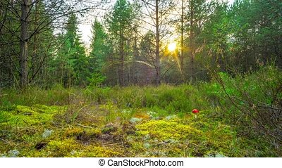 Magic autumn forest with fly agaric, time-lapse with crane