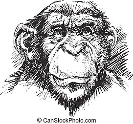 chimp monkey head in black and white color