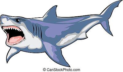 wild shark isolated on the white background