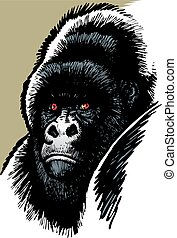gorilla mother head isolated on the white background