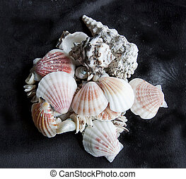 Sea shells in a bunch on black background