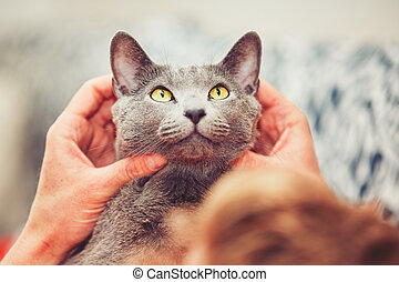 Man with cat - Hand of young man with his russian blue cat.