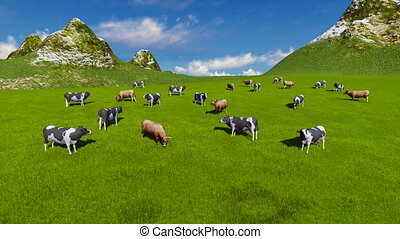 Cows on alpine pasture Aerial view - Aerial view of a herd...