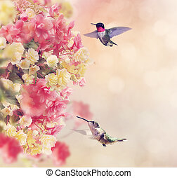 Hummingbirds and Flowers - Hummingbirds in Flight Around...