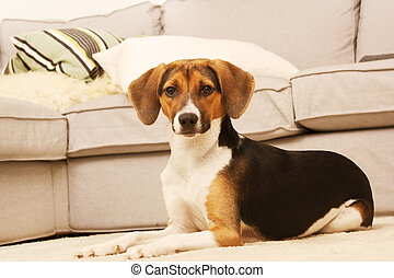 Pretty puppy in living room