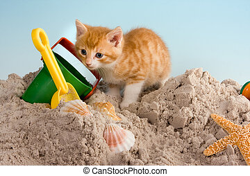 Beach cat - Six weeks old kitten playing in sand